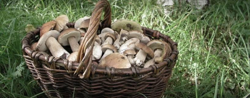 Про грибы...